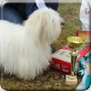 Cotoní výprava na Happy Dog Show 2018